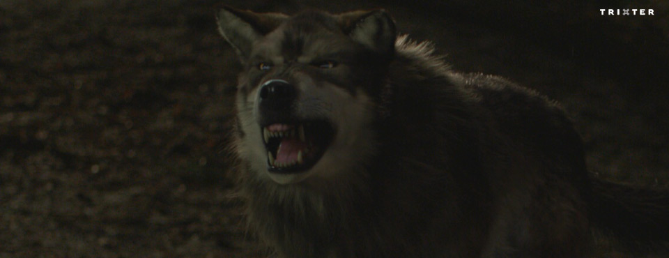 Wolfblood 2